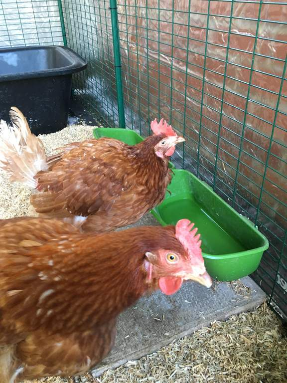 tilbehør til høns