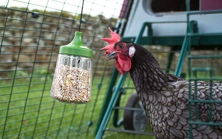 The Rocky Peck Toy will add interest to your chickens' run